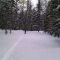 Retour sur les Lutins par la forêt